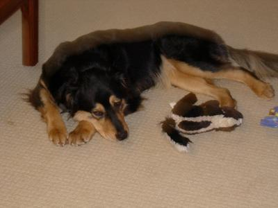 Bella with her skunk