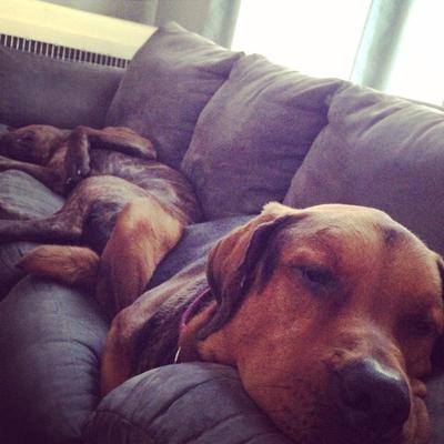 Hard life.... Cash and his puppy brother Ruger
