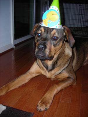 Rottweiler mix birthday